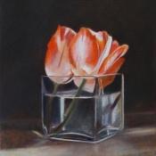 tulpjes-rood-wit