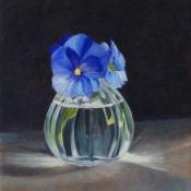 viooltjes-blauw